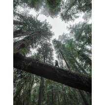 Boyscout vászon kép, 90x120cm