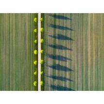 Fields vászonkép, 120x90cm