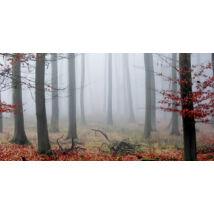 Fogged Autumn vászonkép, 140x70cm