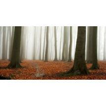 Covered Autumn vászonkép, 140x70cm