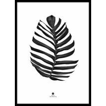 Pálmalevél - Jungle leaf kép, Fekete 50x70 cm