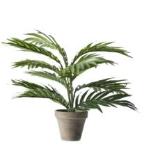 Areca Palm, művirág cserépben