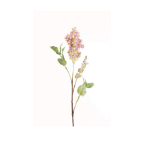 Művirág vágott orgona, lila