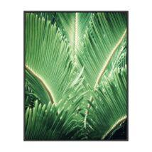 Tropic tree kép, fekete 70x100cm