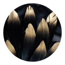 Golden feather kép,  D90 cm
