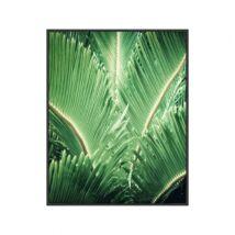 Tropic tree kép, fekete 50x70cm