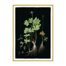 Flora Danica 28 kép, 70x100 cm