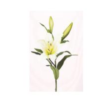 Művirág vágott keleti liliom, krém