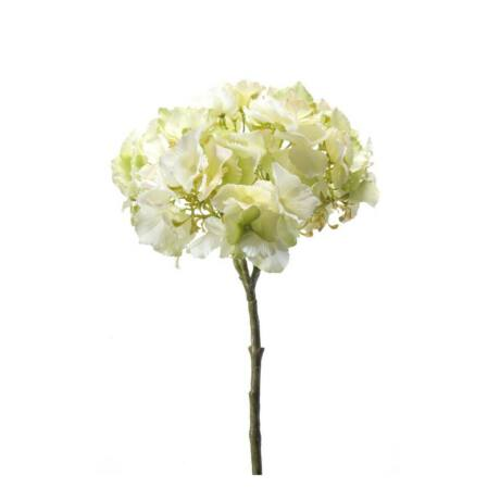 Művirág Hortenzia, krém