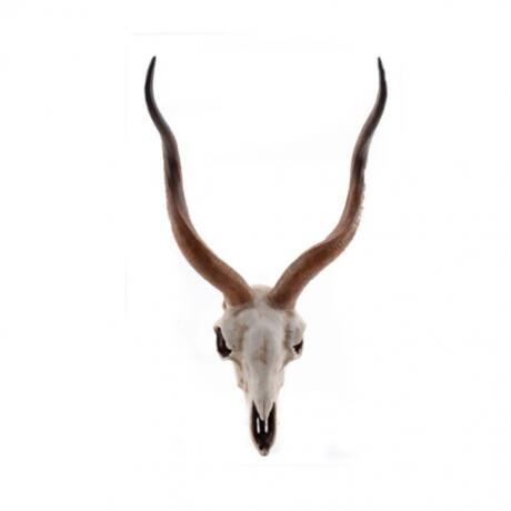 Fali dekoráció antilop koponya, natúr