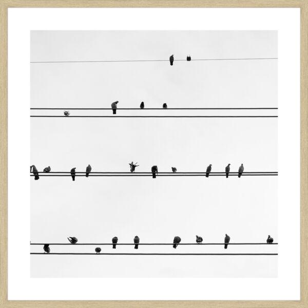 Sleeping Birds kép, 50x50cm