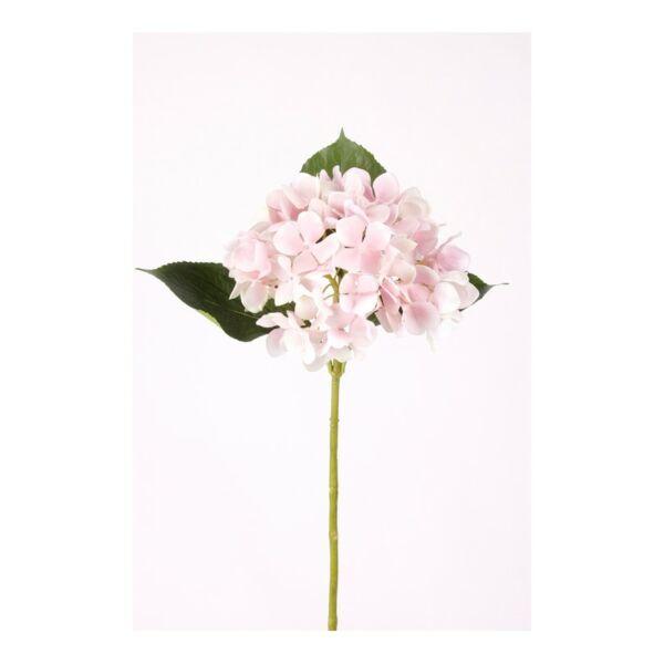Művirág Hortenzia, Rózsaszín