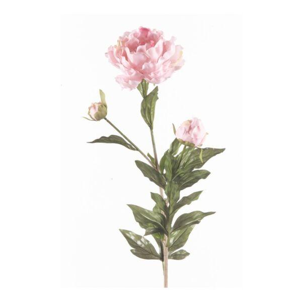 Művirág Peónia, Rózsaszín