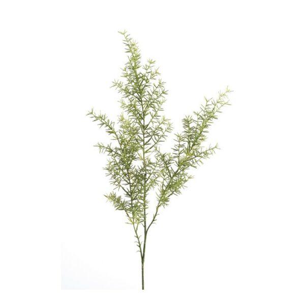 Művirág Aszparágusz, világos zöld