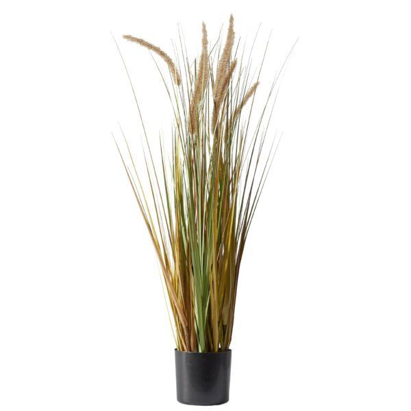 Plume Grass, művirág cserépben
