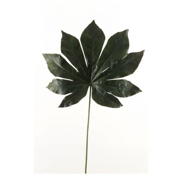 Művirág Arália levél, Sötétzöld