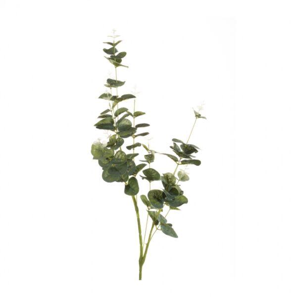 Művirág Eukaliptusz