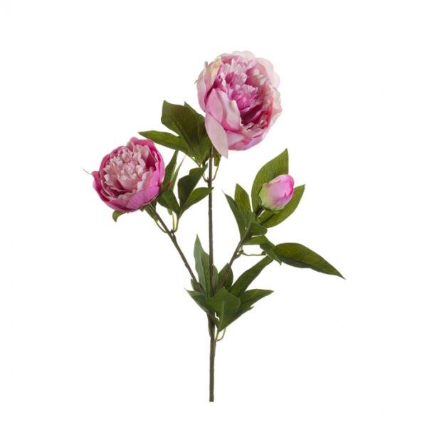Művirág Pünkösdi rózsa, lila